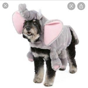 Dog Halloween costume - elephant